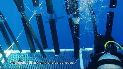 Sharks Among Us Craig O'Connell