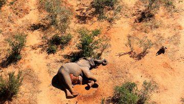 A dead elephant lies in the bush in the Okavango Delta, Botswana.