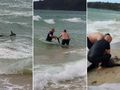 Police officers rescue drowning kangaroo