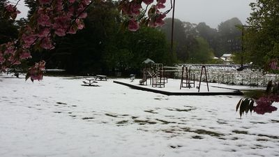 A park at Blackheath is blanketed in snow.