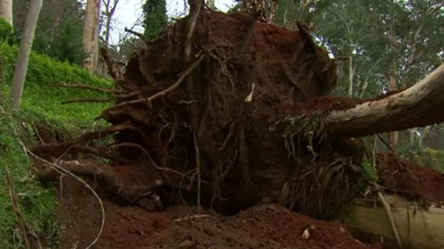 Strong winds have downed trees in parts of Victoria.
