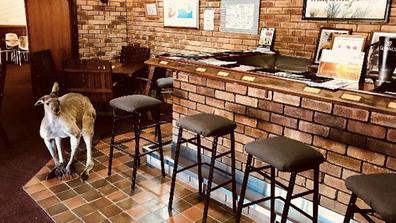 The friendly kangaroos regularly pay the bar a visit.