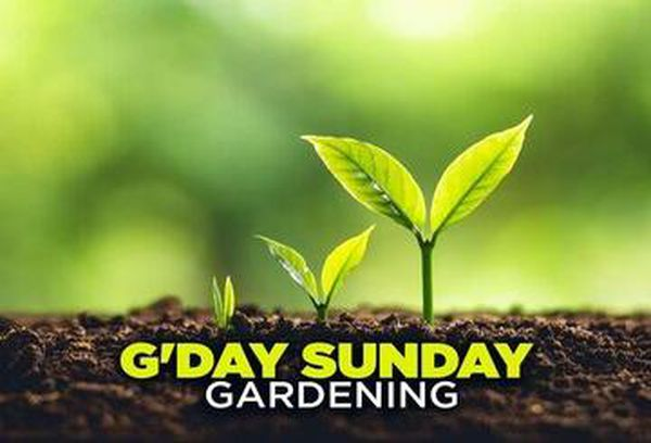 G'Day Sunday: Gardening
