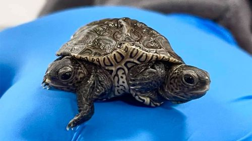 The turtles have been named Ashley and Mary-Kate after the Olsen twins.