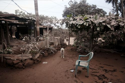 An abandoned dog looks for company. Picture: AP