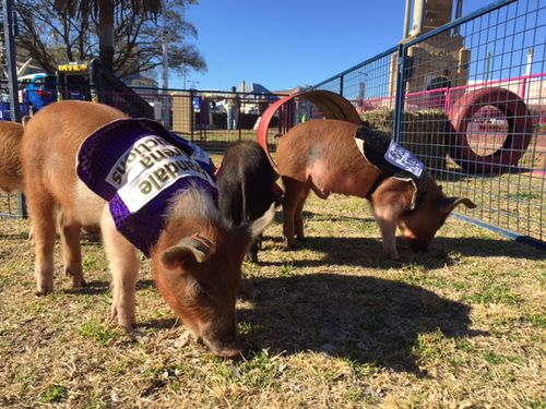 The Warwick appeal includes attractions such as a petting zoo.
