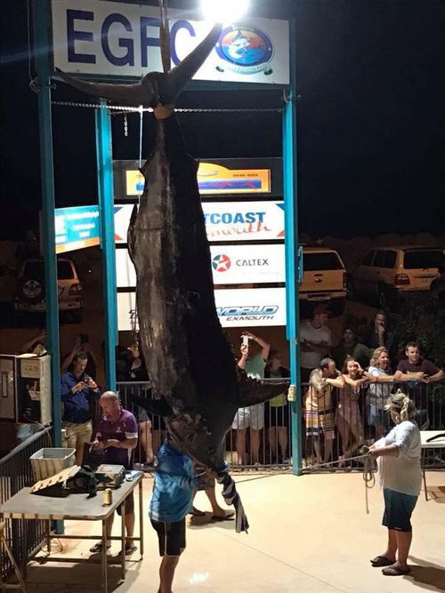 The massive marlin officially weighed in at 494kg. (Facebook)