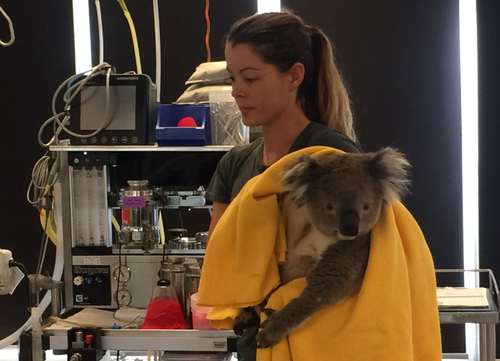 Ernie is still several months from being released into the wild, but the team is confident of a full recovery. (Madeline Slattery / 9NEWS)