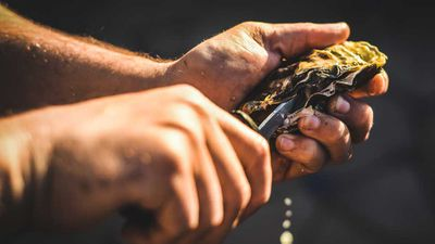 <p>Lonely Planet's Australian foods on Ultimate Eatlist</p> <p>#13: Oysters in Tasmania, Australia</p>