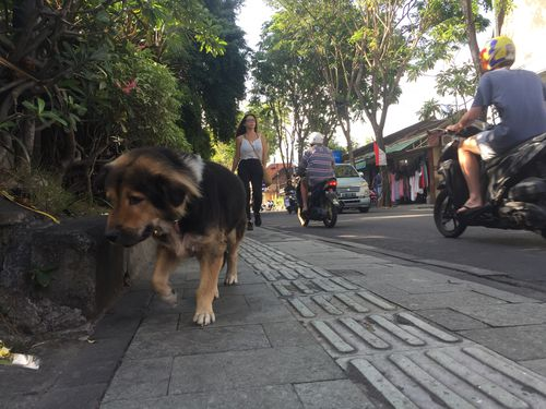 In Bali, dogs are free to roam the streets often being left defenceless when poachers strike, sometimes poisoning and often torturing them before their death.