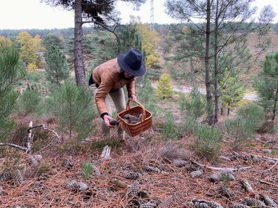 Woman collecting pine cones.