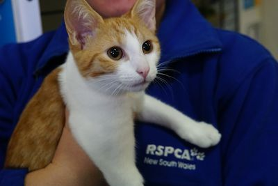 The RSCPA is hoping to clear the shelters this weekend and find loving homes for thousands of animals(Matt Coble).