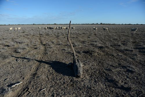 The drought has left many farmlands dry, cracked and dusty.