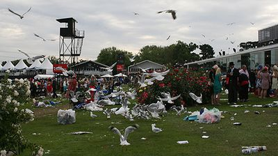 With the race-goers gone, the seagulls feast on the scraps.