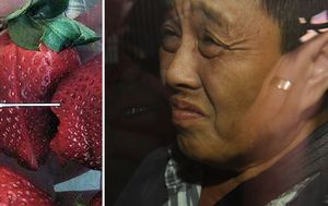 Strawberry needle contamination: DNA links Queensland woman to incident which sparked 'hundreds of copy cats'