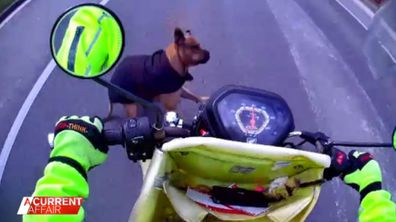 Australia Post launch new campaign to help protect posties from dogs.