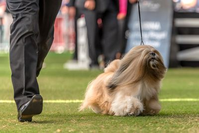 Best in Group (Non-sporting dog): Lhasa Apso