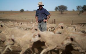 Economic crisis could kill more than coronavirus, Barilaro warns