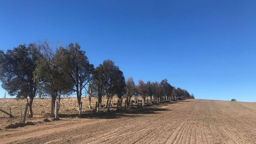 The dry 2018 earth of Cooredulla on the eastern side of Tenterfield NSW.