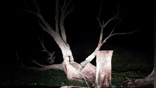 Dean Redden was crushed by a large gum tree in 2016.