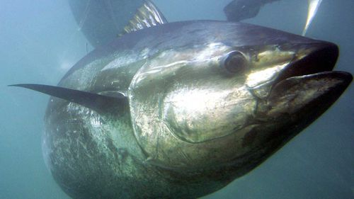 Subway said its tuna was not only genuine, but wild caught.