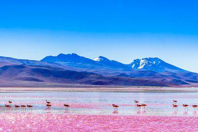9. Bolivia