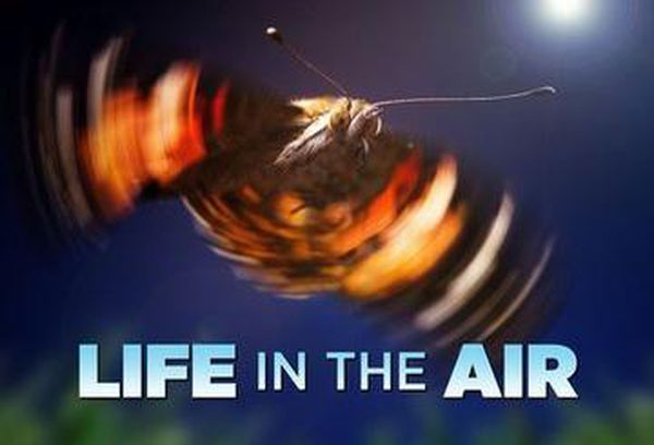 Life In The Air