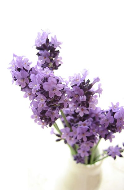 2. Lavender