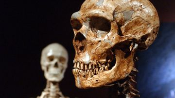Much of the genes that help determine most peoples skin and hair are much more Neanderthal than not, according to two new studies that look at the DNA fossils hidden in the modern human genome.