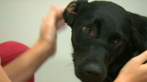Coop was trained from when she was just eight weeks old. (9NEWS)