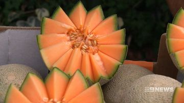 WA rockmelon growers plead with shoppers not to abandon them
