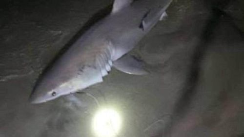 A baby Great White that Lonergan and his girlfriend caught at Bowentown's Cave Bay in November last year