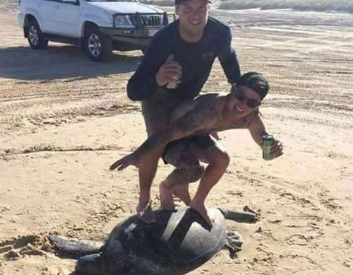 'Idiots' panned for taking photo 'surfing' on the back of a turtle