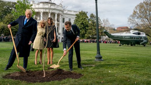 The Oak tree planted by President Macron and President Trump last week mysteriously disappeared. (AP)