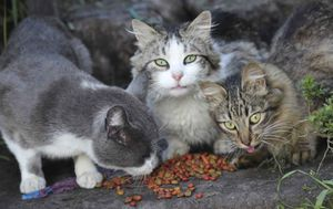 Two household cats confirmed with coronavirus, eight lions and tigers sick