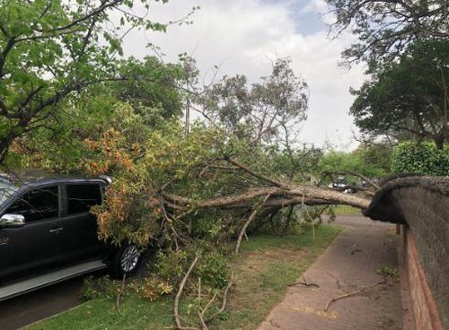 A fallen tree in Prospect, one of the Adelaide suburbs hit by wild winds.