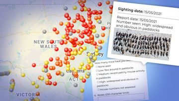 The worst-hit areas, according to CSIRO's mouse tracker map, are the Northern Tablelands, Central West and New England regions of NSW.