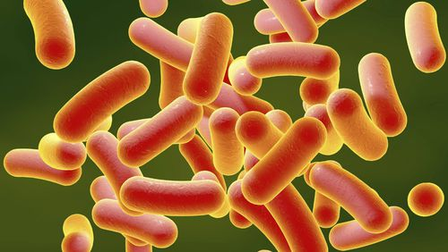 A salmonella outbreak in Adelaide has been linked to a bakery chain.