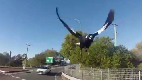 A Queensland cyclist has captured footage of a relentless magpie attack.