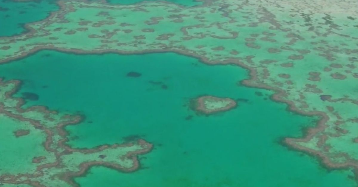 The Great Barrier Reef loses half its coral in three decades – 9News