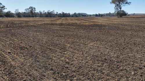 A failed barley crop on the Browns' farm.