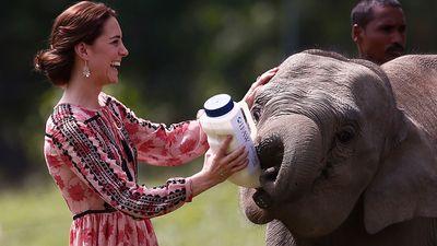 Kate smiles as she feeds a baby elephant at the Kaziranga centre.
