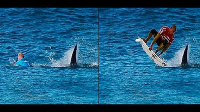 The shark helps Fanning score a perfect 10 in this Photoshop.