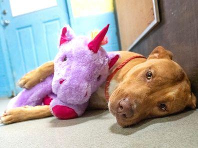 Sisu with his unicorn toy best mate.