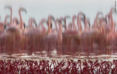 The Upside-Down Flamingos by Paul Mckenzie