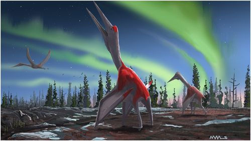Cryodrakon boreas, a previously unknown type of pterosaur, was one of the largest flying animals that ever lived.
