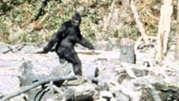 The FBI analysed hairs from a suspected Bigfoot in the 1970s.