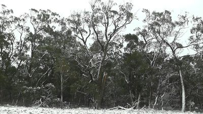 Snow blankets the ground at Wombeyan Caves in NSW. (9NEWS)