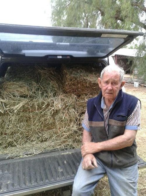 A volunteer ready to feed lucerne hay (seedless hay) to brumbies on private properties outside the park.