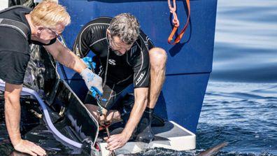 Crown Prince Frederik helps tag tuna
